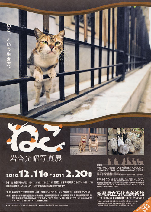 22.12.11neko-1.jpg